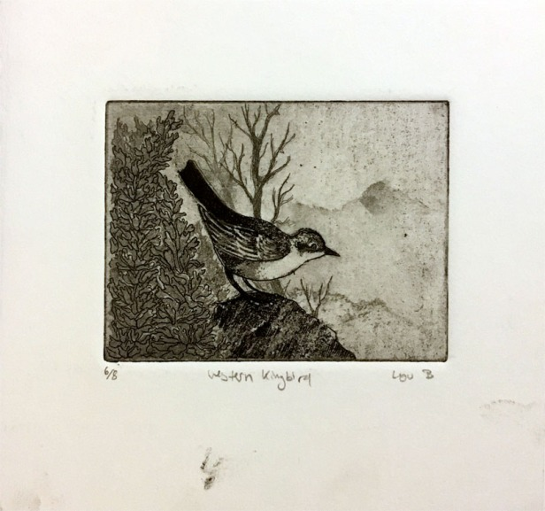 """Western Kingbird"", 6""x6"", aquatint + etching. Only one left!!! $25-75"